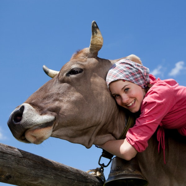 Cows and Cuddling, and Other Obstacles to Success