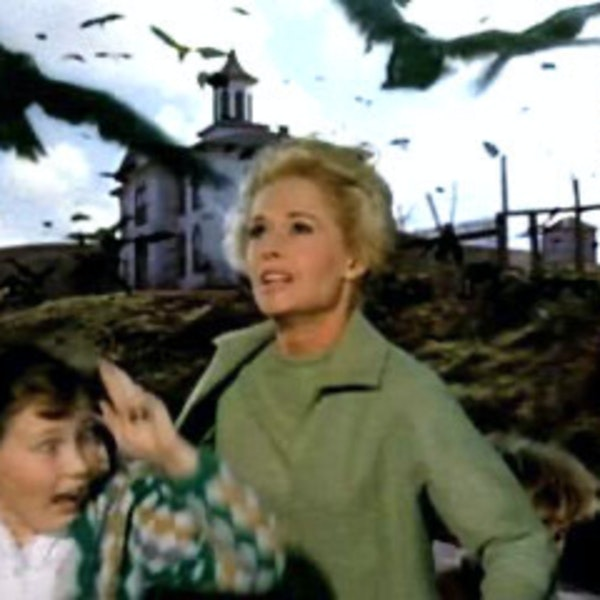 The Birds. Alfred Hitchcock 1963