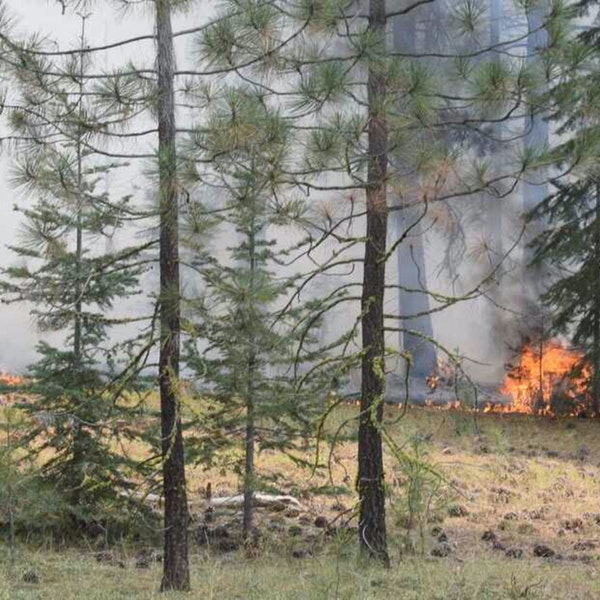 Wildfire Arsonists: A disturbing trend ?