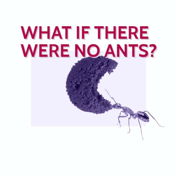 Wonderlette: What if there were no ants?