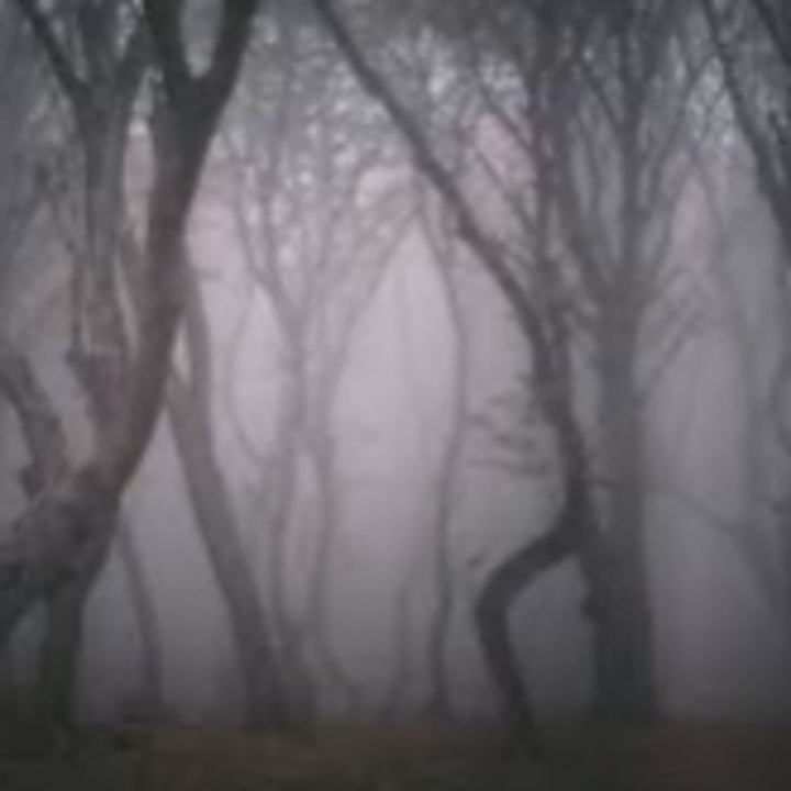Haunted Forest / A New Host