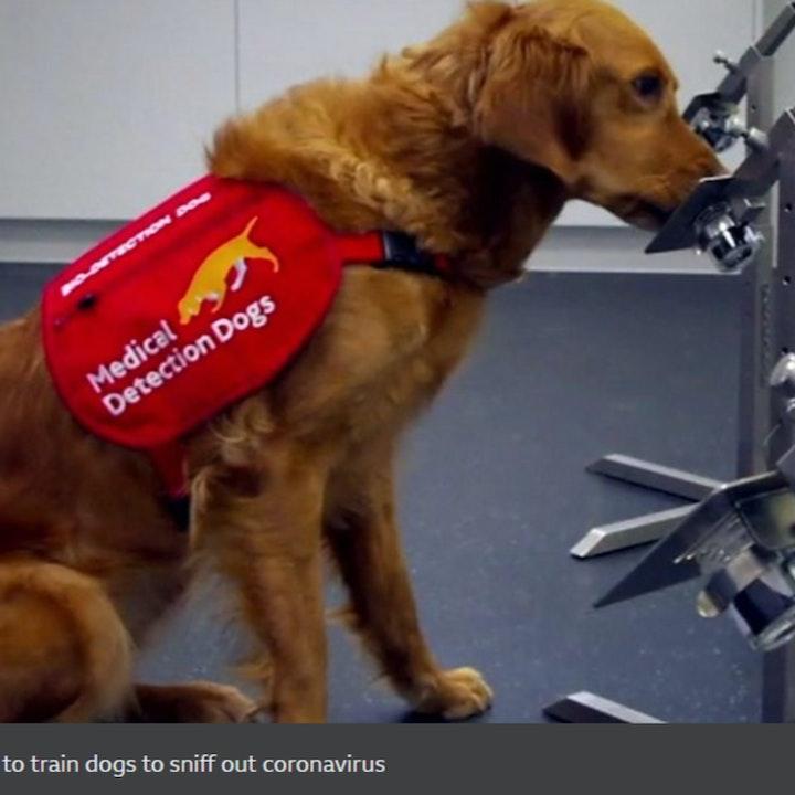 #87 Covid Sniffer Dogs - Mindwars Meets Awakening