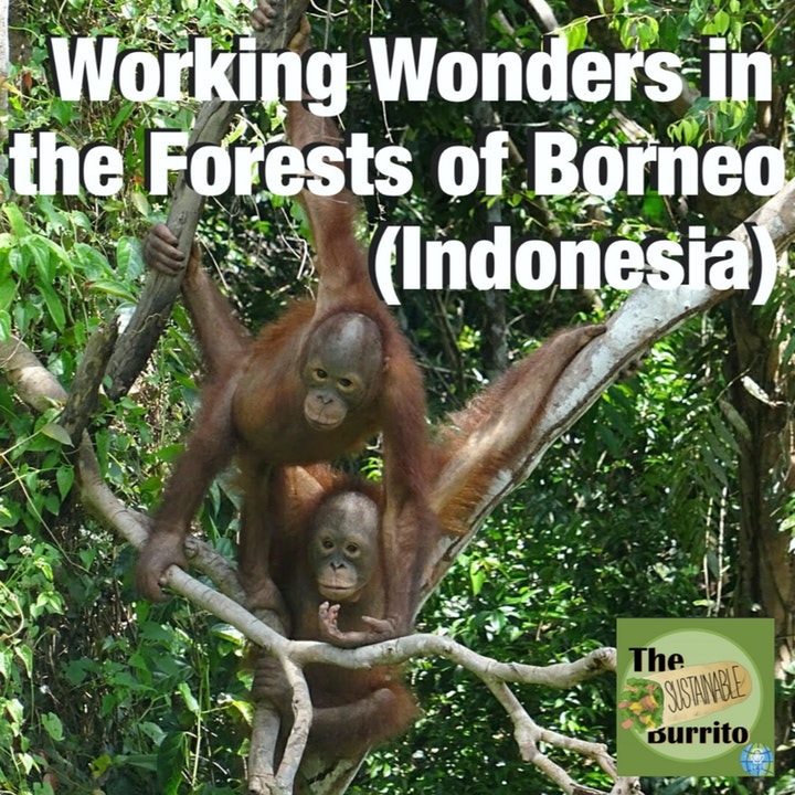 Episode image for Working Wonders in the Forests of Borneo (Indonesia)