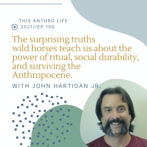 The surprising truths wild horses teach us about the power of ritual, social durability, and surviving the Anthropocene with John Hartigan Jr. Image