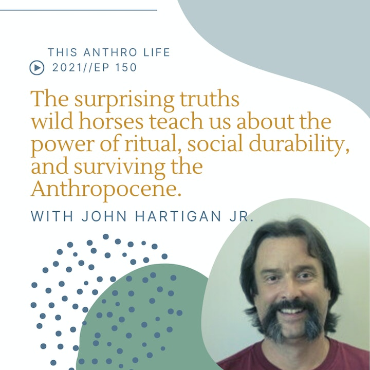 The surprising truths wild horses teach us about the power of ritual, social durability, and surviving the Anthropocene with John Hartigan Jr.