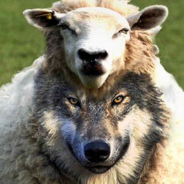 Politicians and Goverment Officials are False Prophets Image