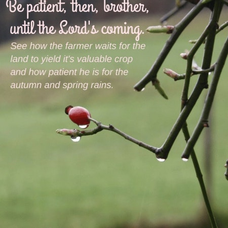 Bible Study Exercise: Patience Image