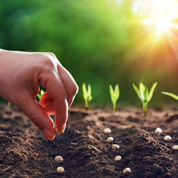 Sowing and Reaping Image