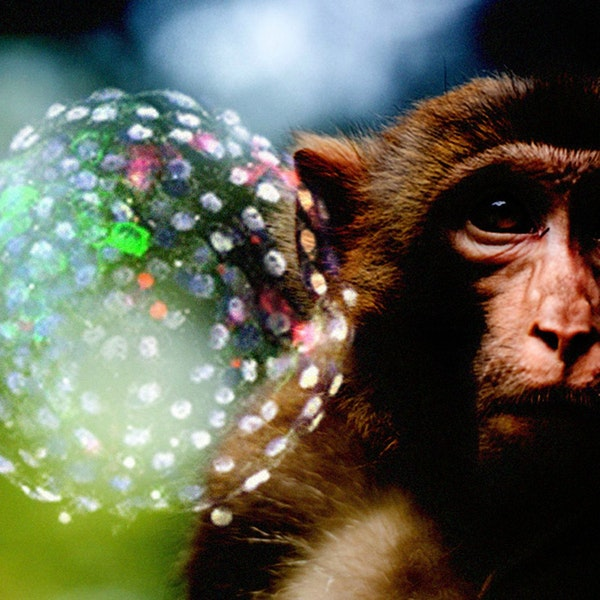 Scientists Create Embryos That Are Part Human Part Monkey Image