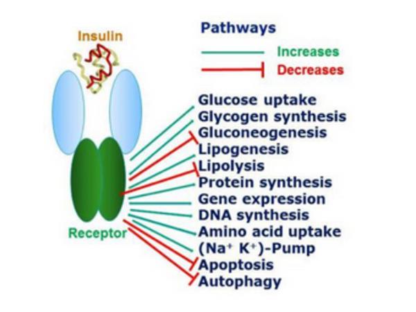 Dr. James Greenblatt - Integrative  Medicine for Binge Eating Image