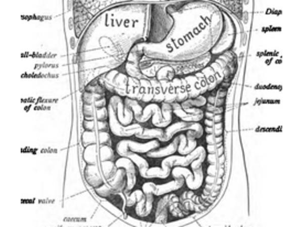 Kristin Grayce McGary - Holistic Keto for Gut Health Image
