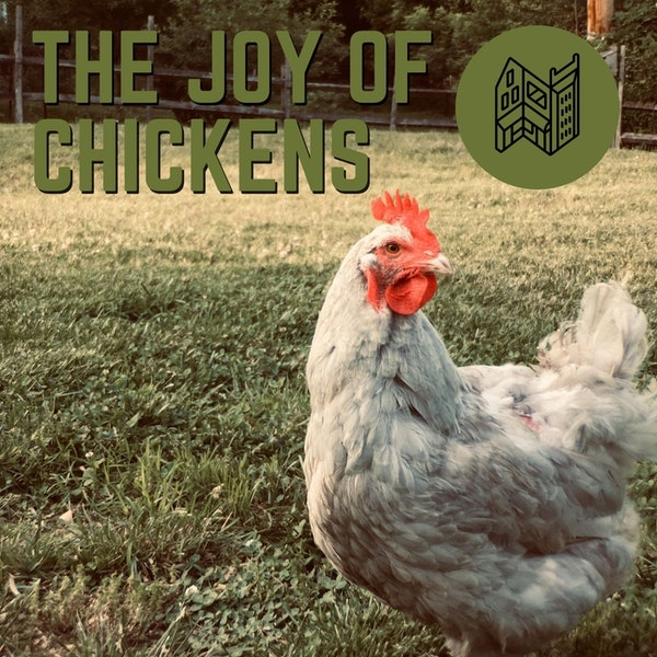The Joy Of Chickens Image