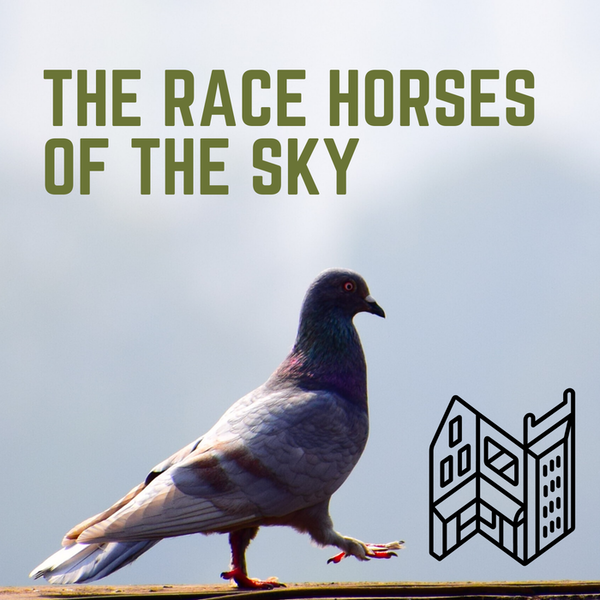The Race Horses Of The Sky Image