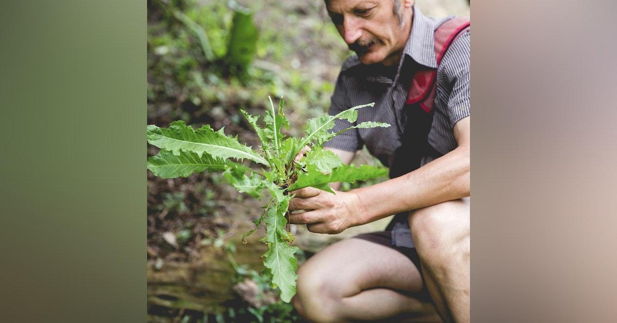 Pip Podcast #33: Wild Harvest with Diego Bonetto