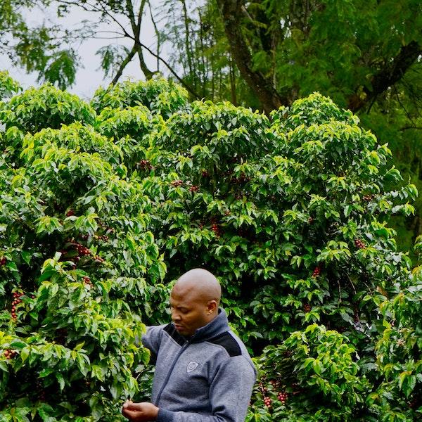 Tasting - Kenya AA Meru Gichugene