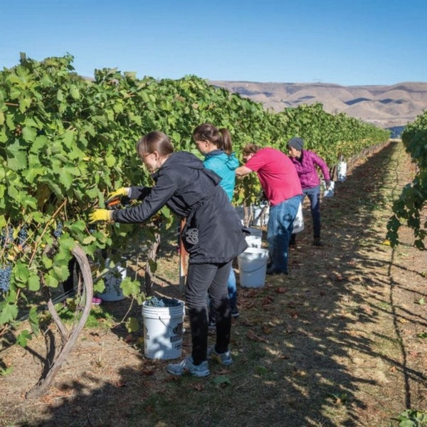 Clearwater Canyon Cellars - Lewiston, ID Pt. 3