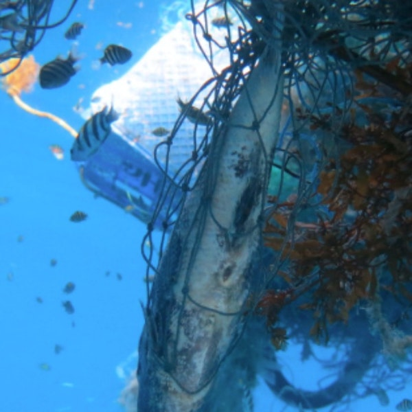 Swimming in an Ocean of Plastics and Hauling it Out