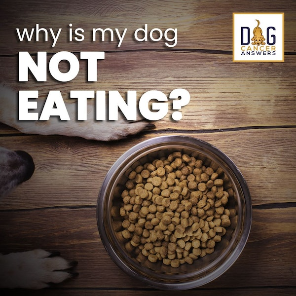 Why Is My Dog Not Eating? | Dr. Trina Hazzah Deep Dive