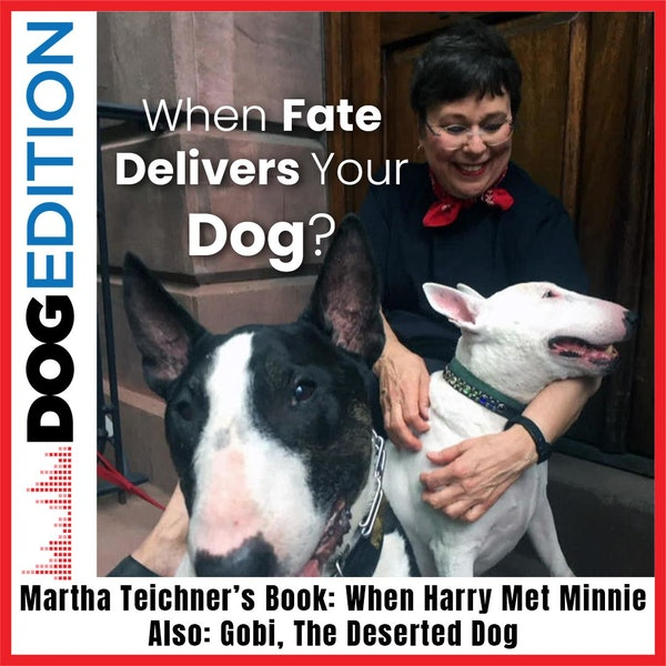 "When Fate Delivers Your Dog: Martha Teichner's Book ""When Harry Met Minnie""   Gobi The Desert Dog   Dog Edition #9"