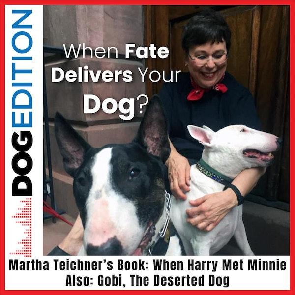 "When Fate Delivers Your Dog: Martha Teichner's Book ""When Harry Met Minnie"" | Gobi The Desert Dog | Dog Edition #9"