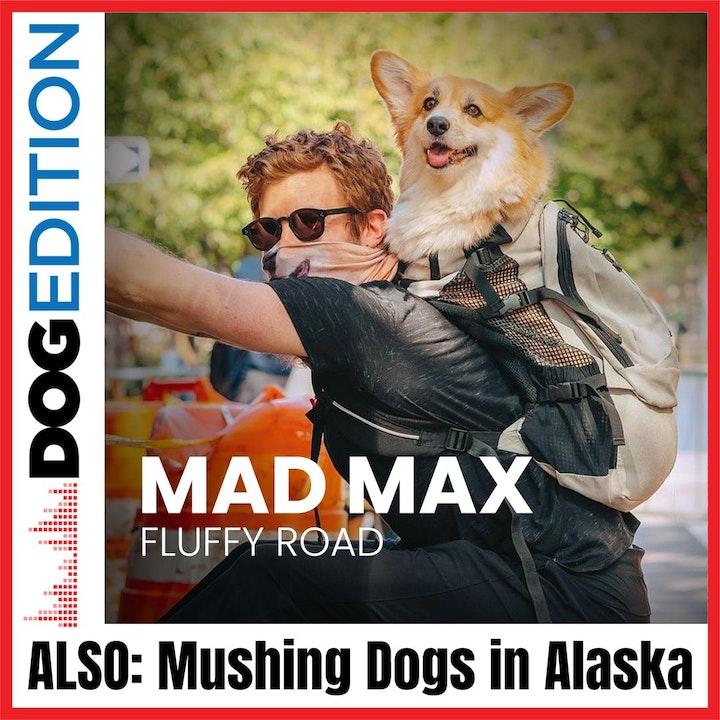 Mushing Dogs in Alaska | Maxine the Fluffy Corgi | Dog Edition #16