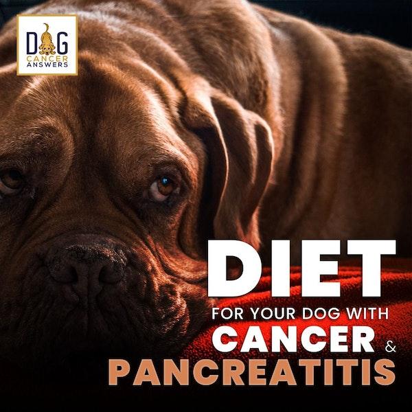 Pancreatitis Dog Diet for Cancer │ Dr. Nancy Reese Q&A