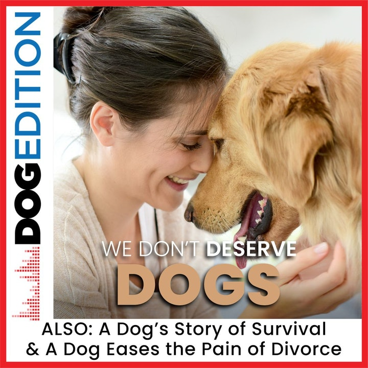 A Dog's Story of Survival | We Don't Deserve Dogs | A Dog Eases the Pain of Divorce | Dog Edition #14