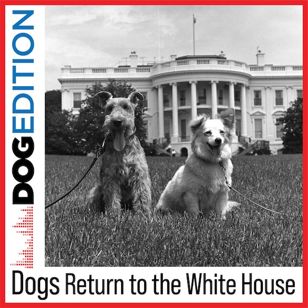 Dogs Return to the White House | Dog Edition #1