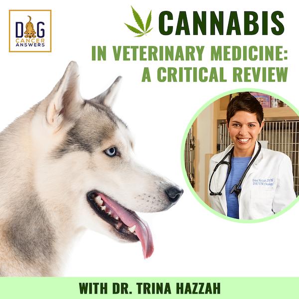 Cannabis in Veterinary Medicine: A Critical Review | Dr. Trina Hazzah Deep Dive
