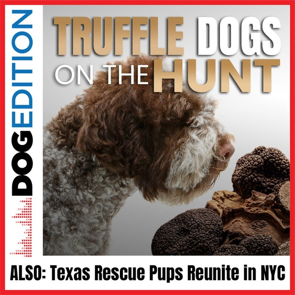 Truffle Dogs on the Hunt   Dog Edition #12