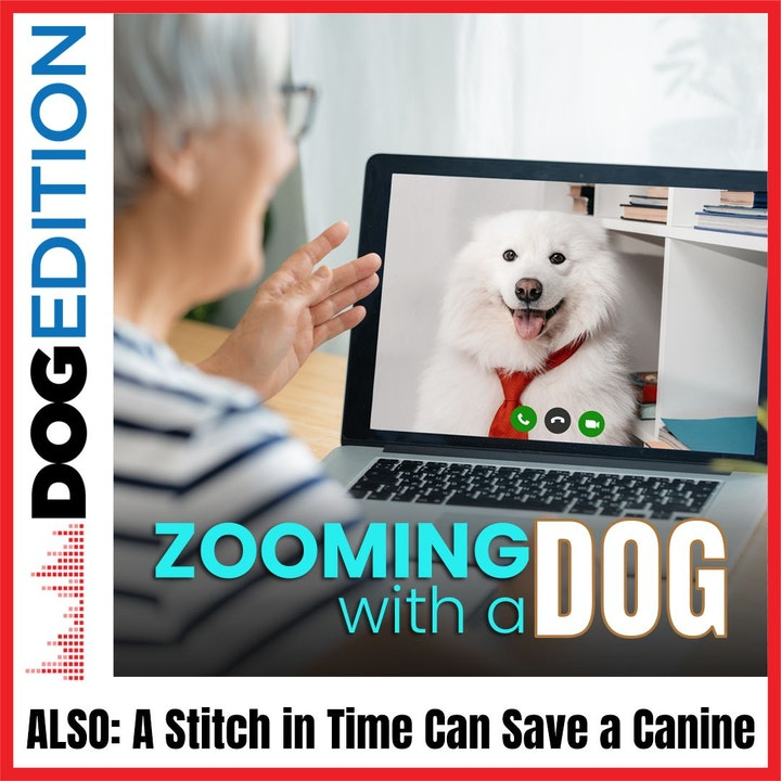 Zooming with Dogs | A Stitch in Time Can Save a Canine | Dog Edition #15
