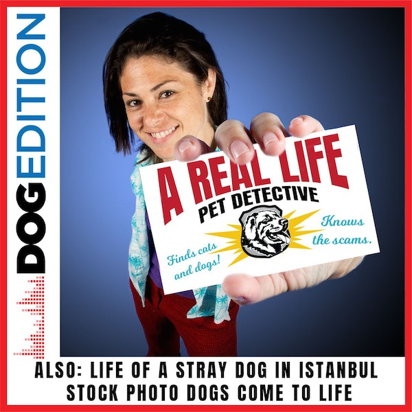 A Real-Life Pet Detective | Life of a Stray Dog in Istanbul | Stock Photo Dogs Come to Life | Dog Edition #11