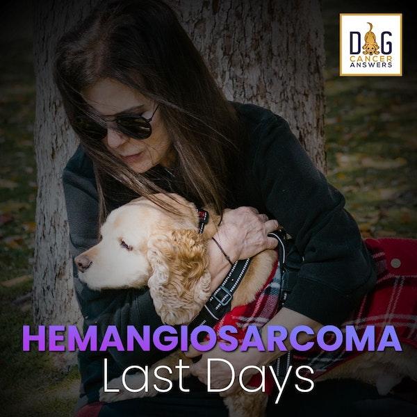 Hemangiosarcoma Dog Symptoms: What Happens in the Last Days | Dr. Trina Hazzah Q&A