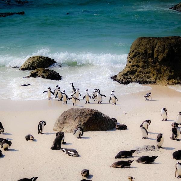 Digital Nomad: Cape Town Image