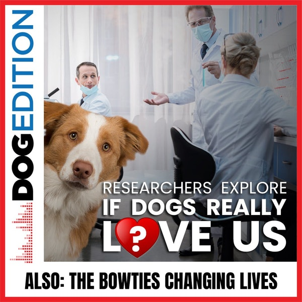 Researchers Explore If Dogs Really Love Us | The Bowties Changing Lives | Dog Edition #38