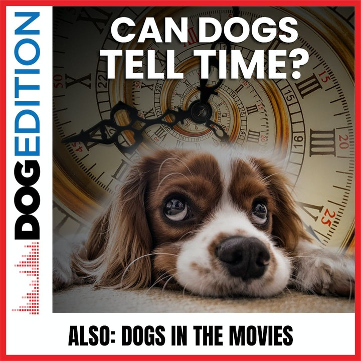 Can Dogs Tell Time? | Dogs In The Movies | Dog Edition #34