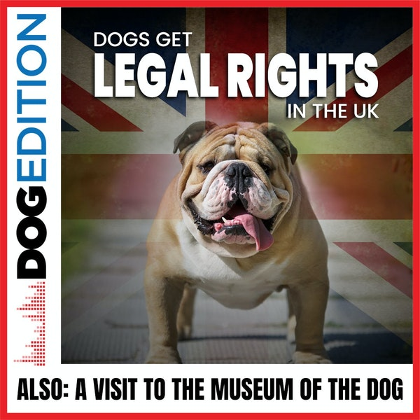 Dogs Get Legal Rights In The UK | A Visit To The Museum Of The Dog | Dog Edition #20