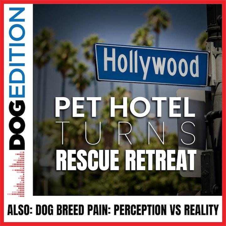 Hollywood Pet Hotel Turns Rescue Retreat   Dog Breed Pain: Perception vs Reality   Dog Edition #21