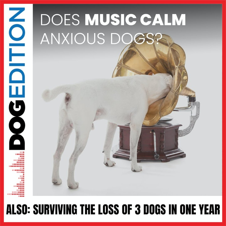 Can Music Calm an Anxious Dog | Surviving the Loss of Three Dogs in A Year | Dog Edition #18