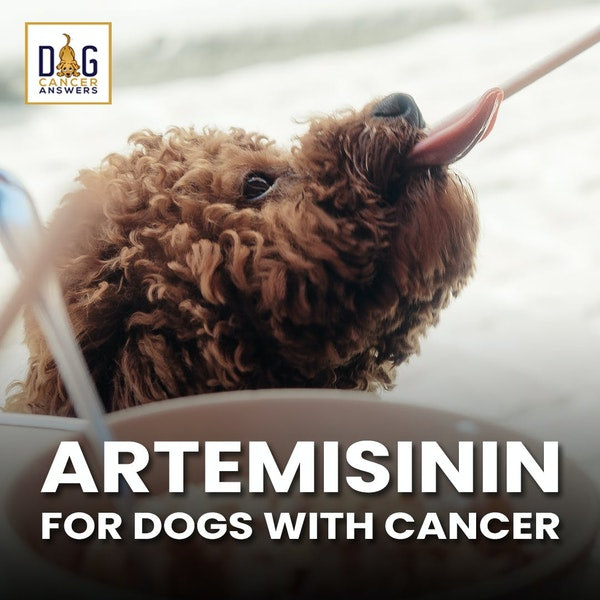 Artemisinin for Dogs with Cancer | Dr. Nancy Reese Deep Dive