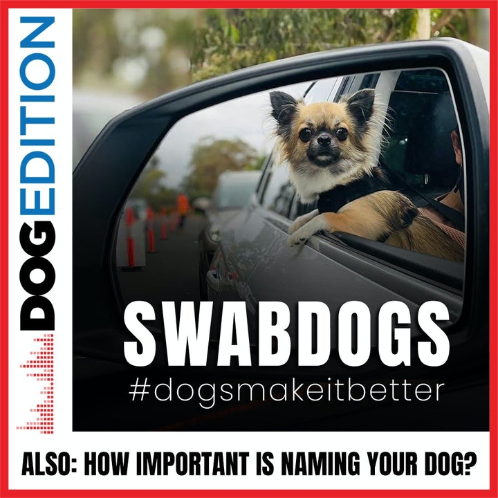 Swabdogs Put Smiles On Dials | How Important Is Naming Your Dog? | Dog Edition #26