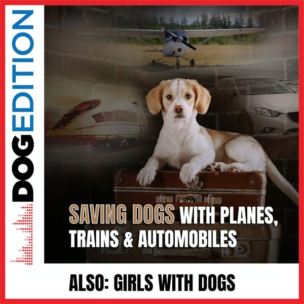 Saving Dogs With Planes, Trains & Automobiles | Girls With Dogs | Dog Edition #33