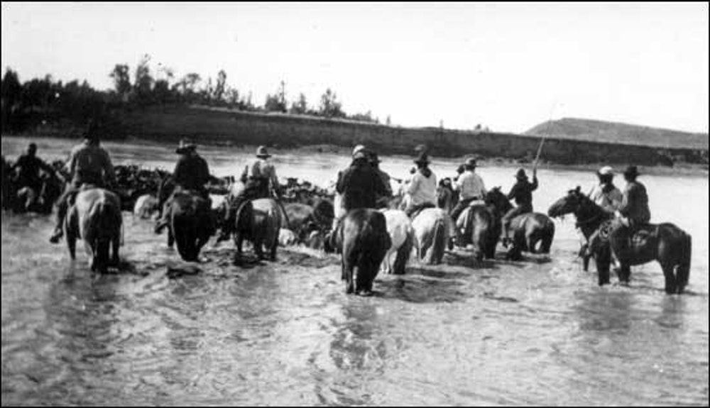 The Texas Cattle Drives of 1866 to 1890 Part 2