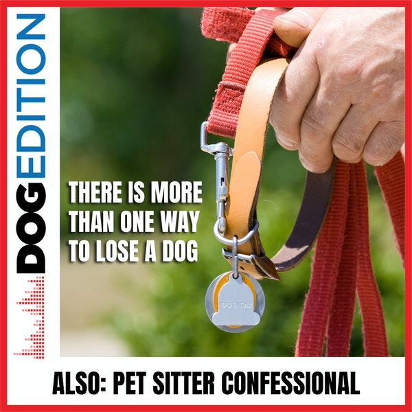 There Is More Than One Way To Lose A Dog | Pet Sitter Confessional | Dog Edition #32