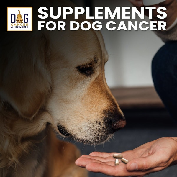 Supplements for Dogs with Cancer | Dr. Demian Dressler Deep Dive
