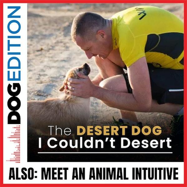 The Desert Dog I Couldn't Desert | Meet An Animal Intuitive | Dog Edition #27