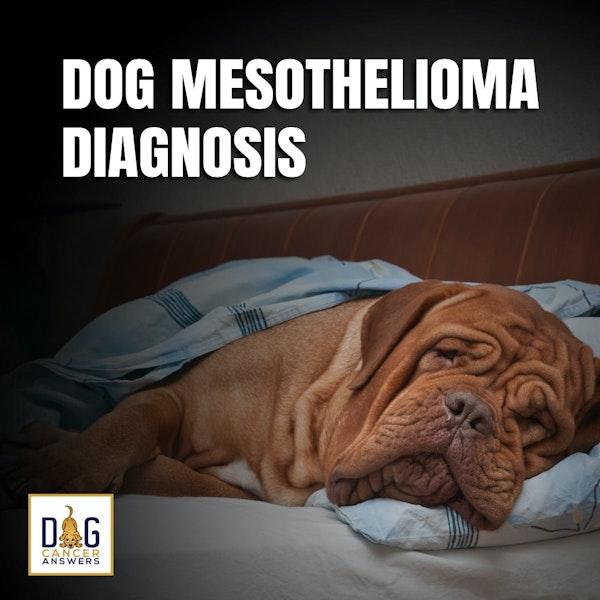 Dog Mesothelioma Diagnosis | Dr. Dressler Q&A