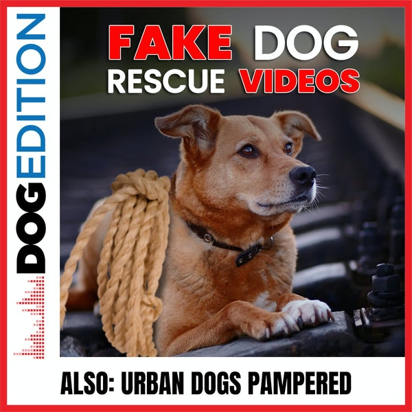 Fake Dog Rescue Videos | Urban Dogs Pampered | Dog Edition #39