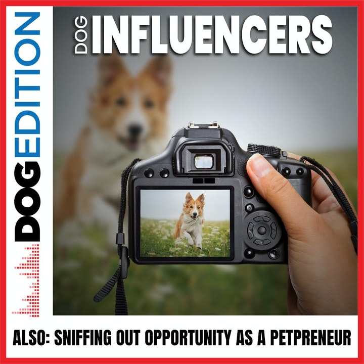 Dog Influencers | Sniffing Out Opportunity As A Petpreneur | Dog Edition #19