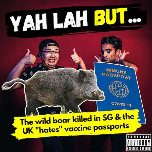 """YLB #134 - A wild boar gets euthanized in SG & thousands sign a petition against """"vaccine passports"""" in the UK"""